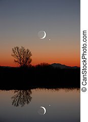 Winter Moon and Lone Tree - Stylized Winter Moon, Venus, and...