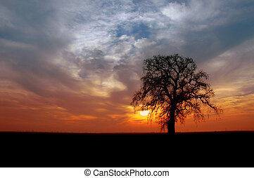 Winter Oak Tree - Silhouette of Winter Oak Tree, Setting...