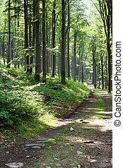 Trip in the forest - Green forest in a sunny day