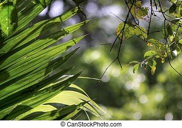 fresh leaf in jungle
