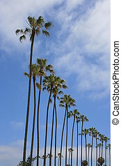Palms - Rows of palm trees.