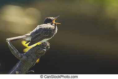 Little bird singing - Little bird perched on a branch...