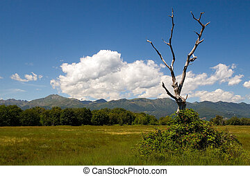 Lonely tree - Environs of Biella in Piemont (Italia)