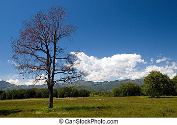 Lonely tree - Environs of Biella in Piemont (Italia) Canon...