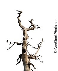 Crooked Tree - Crooked tree, white backdrop