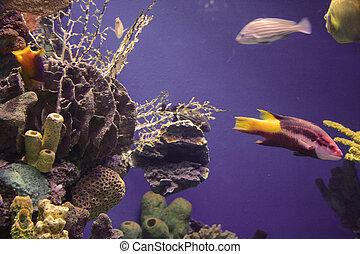 aquarium - rich, vibrant color into the marine aquarium