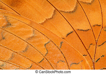 butterfly wing extreme closeup - very close view of an alive...