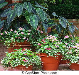 Plant variety - Several planters with flowers and plants.