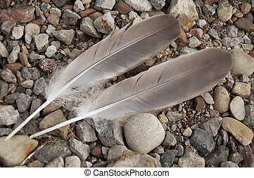 Two Feathers - two feathers in balanced contrast to stones...