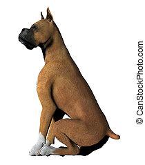 Boxer - 01 - Boxer dog sitting quietly