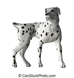 Dalmatian - 04 - Dalmatian standing in wait for a command