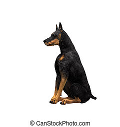 Doberman - 01 - The fierce and loyal Doberman in a variety...