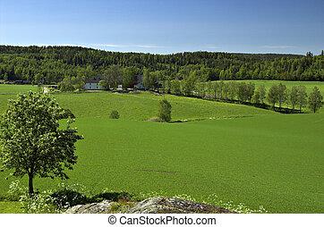 Norwegian Field Landscape - A Norwegian summer landscape....