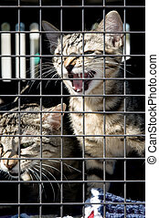 MEOW - A kitten and a cat in a cage