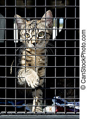 Looking for a Home - An orphan kitten in a cage, reaching...