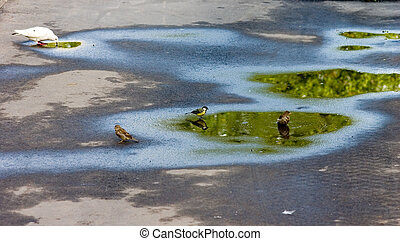 Watering place - Birds on asphalt in city satisfying I...