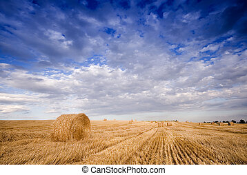 Bale in landscape - Summer hay bale in a ungarian field, and...