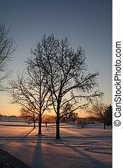 alvorada, árvore, Inverno