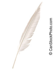 Feather - a white Feather, Quill Pen
