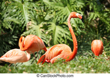 Beautiful Flamingo on Lush Green Background Foilage
