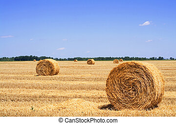 Straw or hay bales on a stubble field - Stubble field with...