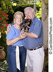 grand parents - happy grand parents holding little chihuahua...