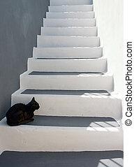 noir, chat, escalier