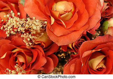 Hybrid red Roses - Beautiful yellow and red hybrid roses...
