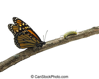 Life Cycle - Monarch butterfly and a caterpillar on a twig