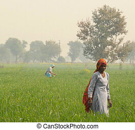 Indian woman farming - Indian woman in agra working in the...