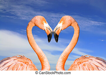 Pink flamingo like heart - Two pink flamingos like heart on...