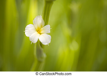 Small White Flower on Green Background - Delicate white...