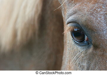 Inspirational eyes of a horse