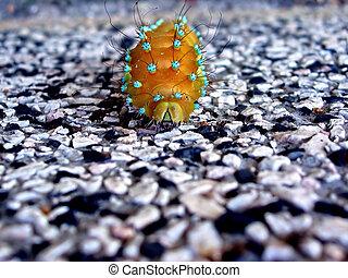 caterpillar - big yellow caterpillar