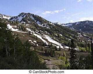 Mount Baldy near Snowbird, Alta, Utah