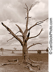 desolation - sepia image of an old dead tree sitting in the...