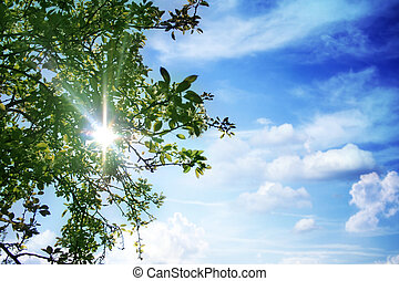 background - sun - sky - a tree in front of the sun in the...