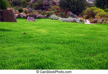 Grass field - green grass field on the city park