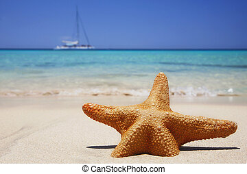 Beach Starfish - Starfish on tropical beach with yacht in...