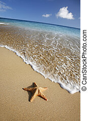 Beach Starfish - Starfish on tropical beach with waving...