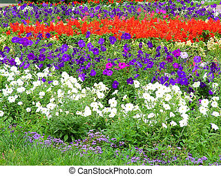 flowerbed - a flowerbed in a tropical city with lots of...