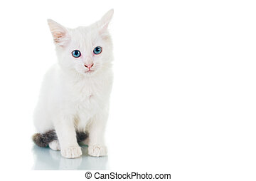 Sad Kitten - Adorable white kitten with blue eyes, looking...