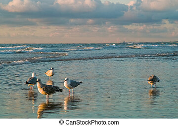 sea and the seagulls - dutch seaside with seagulls