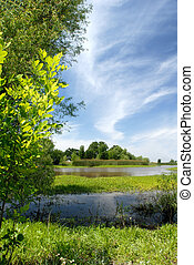 Summer Marsh Scene, Green Grass, Blue Sky and White Stratus...