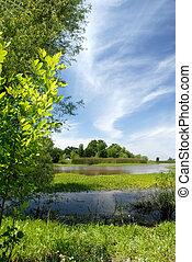 Summer Marsh Scene, Green Grass, Blue Sky and White Stratus...