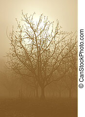 Sepia Tone Bare Walnut Trees