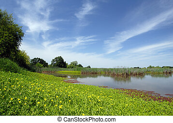 Summer Marsh and Meadow - Green Summer Marsh and Meadow,...