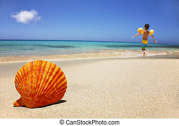 Beach Scene - Tropical beach with seashell with boy in the...