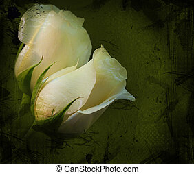 White Roses Grunge - Two white roses on green textured...