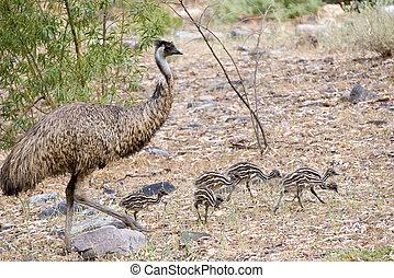 EMU, polluelos